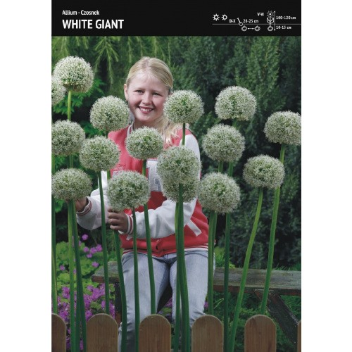 Czosnek Ozdobny White Giant Cebulka 1szt
