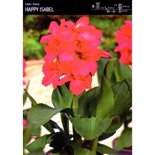 Canna - Kanna Happy Isabel 1szt.