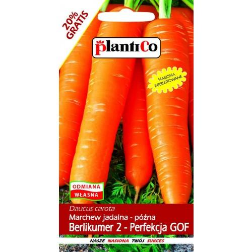 Marchew Jadalna Berlikumer 2 - Perfekcja GOF 6g PlantiCo