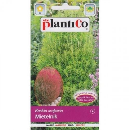 Mietelnik Kochia 2g PlantiCo