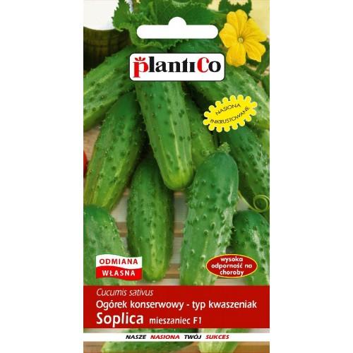 Ogórek Gruntowy Soplica 5g PlantiCo