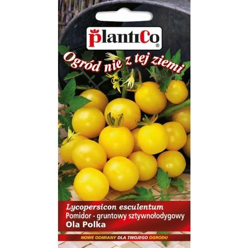 Pomidor Gruntowy Ola Polka 0,5g PlantiCo