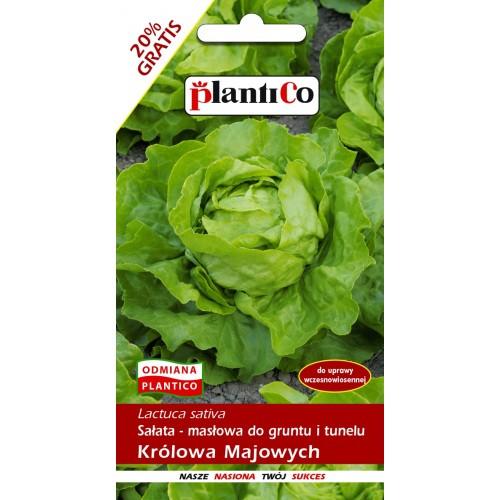 Sałata Masłowa Królowa Majowych 1,2g PlantiCo