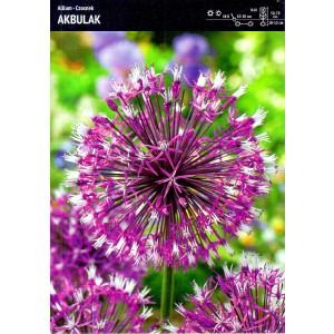 Allium - Czosnek Akbulak 3szt