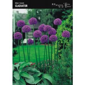 Czosnek Gladiator Allium Wyjątkowy Cebulka 1szt