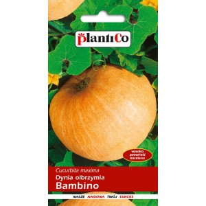Dynia olbrzymia Bambino 5g PlantiCo