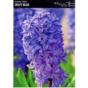 Hiacynt Delft Blue Cebulka Niebieski 10szt