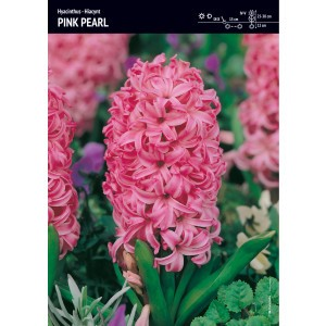 Hiacynt Pink Pearl Różowy Cebulka 3szt