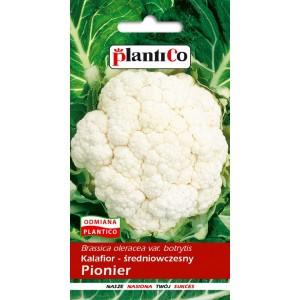 Kalafior Pionier 1g PlantiCo