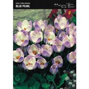 Krokus Blue Pearl Niebieski Cebulka 10szt
