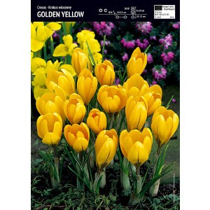 Krokus Wielkokwiatowy Golden Yellow Cebulka 10szt