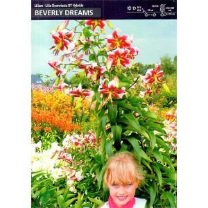 Lilia Drzewiasta Beverly Dreams Cebulka 1szt