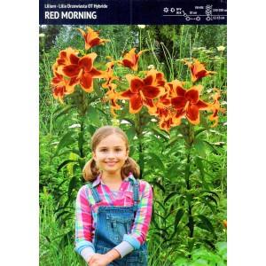 Lilia Drzewiasta Red Morning Cebulka 1szt