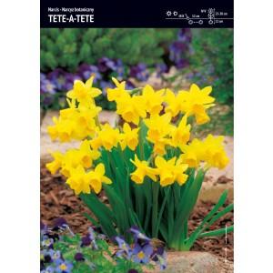Narcyz ŻółtyTete-A-Tete Cebulka 5szt
