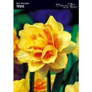 Narcys Pełny Texas 5szt