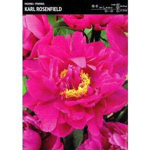 Piwonia Karl Rosenfield 1szt.