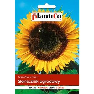 Słonecznik Ogrodowy Jadalny 10g PlantiCo