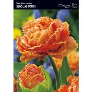 Tulipan Sensual Touch Cebulka 5szt