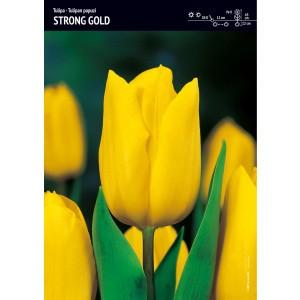 Tulipan Strong Gold Jaskrawożółty Cebulka 5szt