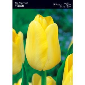 Tulipan Żółty Triumph Yellow Cebulka 4szt