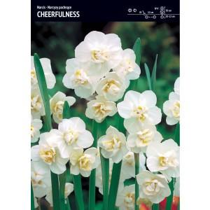 Narcyz Pachnący Cheerfulness Cebulka 5szt