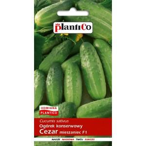 Ogórek Gruntowy Cezar 5g PlantiCo