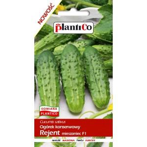 Ogórek Gruntowy Rejent 5g PlantiCo