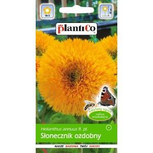 Słonecznik Ozdobny Niski 2g PlantiCo