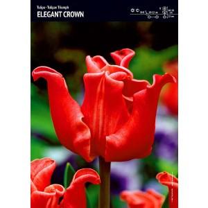 Tulipan Ekskluzywny Elegant Crown Cebulka 5szt