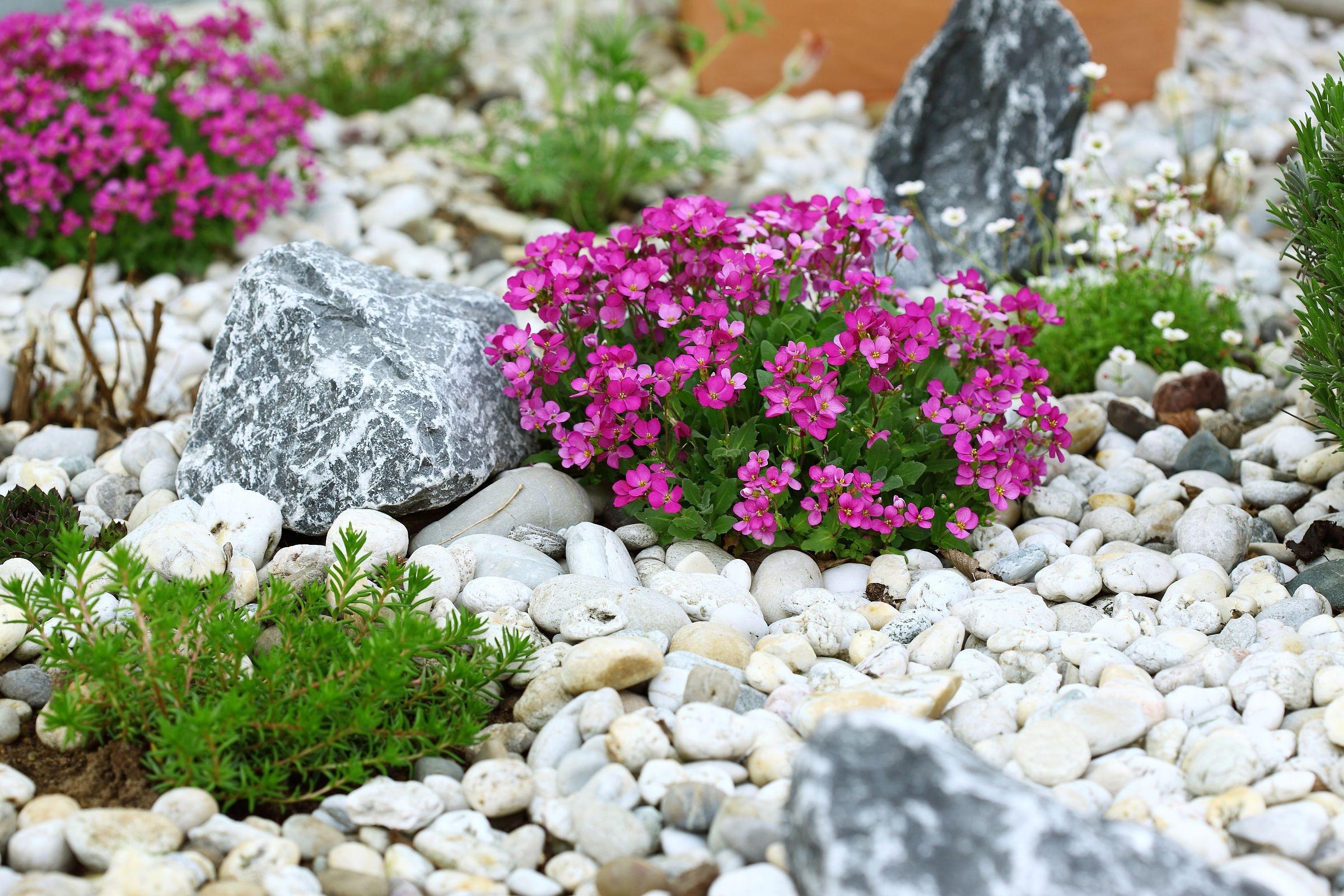 Kamienie ogród