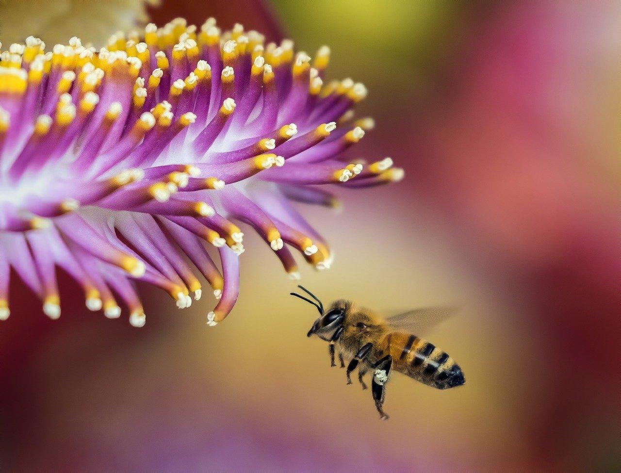 Pszczoła latająca