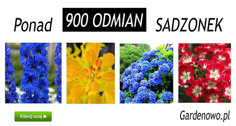 sadzonki Gardenowo pl