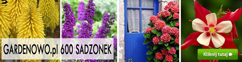 różne kolorowe sadzonki Gardenowo.pl