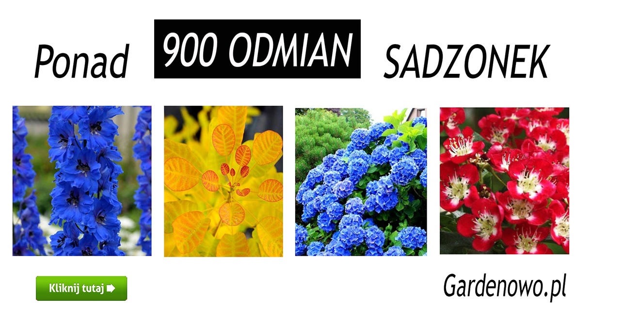 Sadzonki Kwiatów Owoców I Warzyw Sklep Ogrodniczy