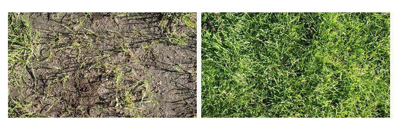 zastosowanie trawy samo zagęszczającej