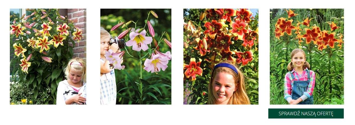 Cebulki kwiatów